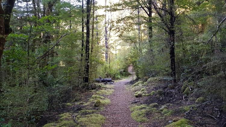 Track beside Blue Creek Kahurangi National Park