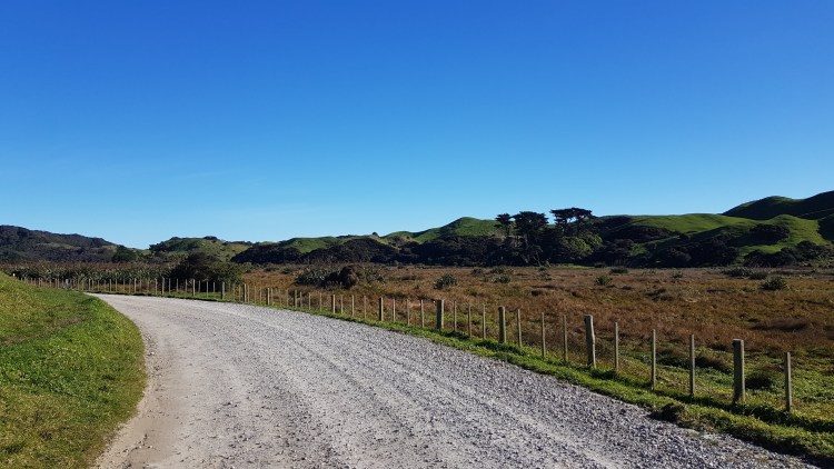 Walking Wharariki Road