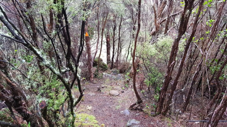 The steep drop from the Chromite Mine Track down to the Hacket Track