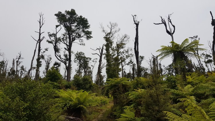 Few trees left standing after Cyclone Ita hit in 2014