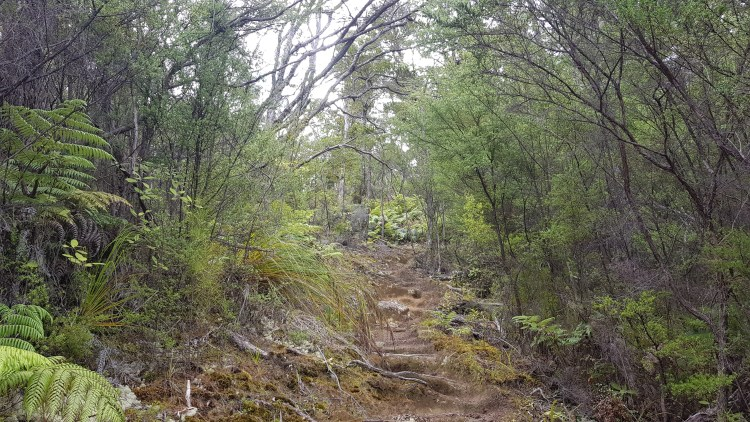 Abel Tasman Inland Track to Holyoake Shelter