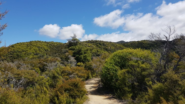 The track to Observation Beach