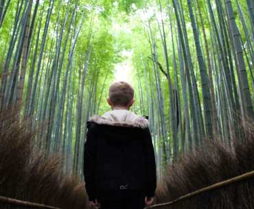 Japan trees with kids
