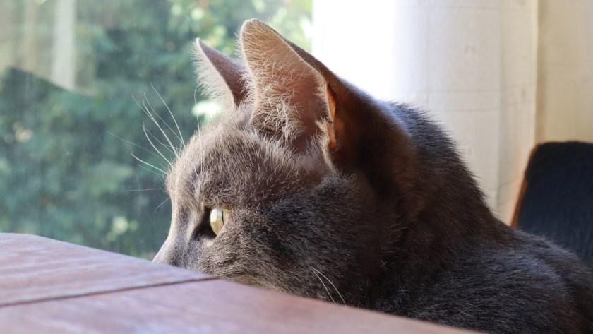 Flor Kaneshiro neighbor cat 2