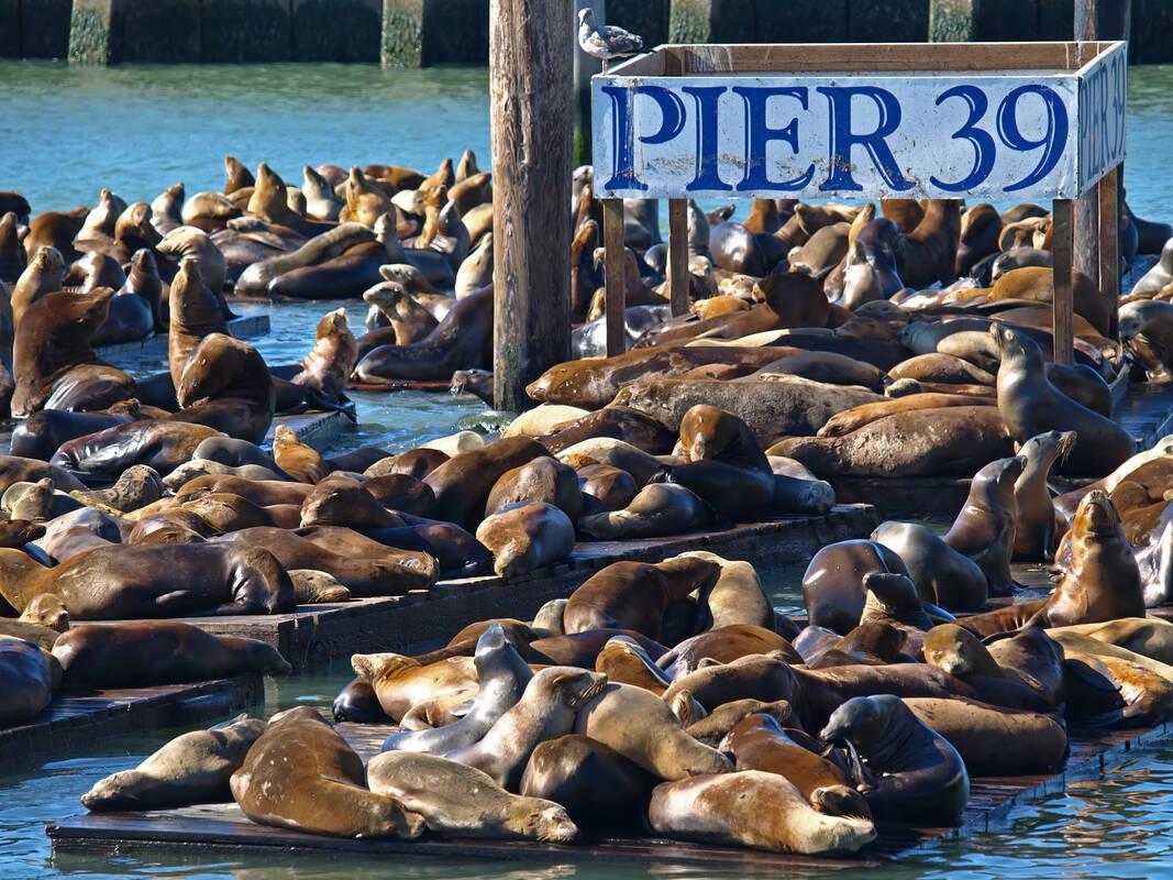 Restaurants San Francisco Fisherman Wharf