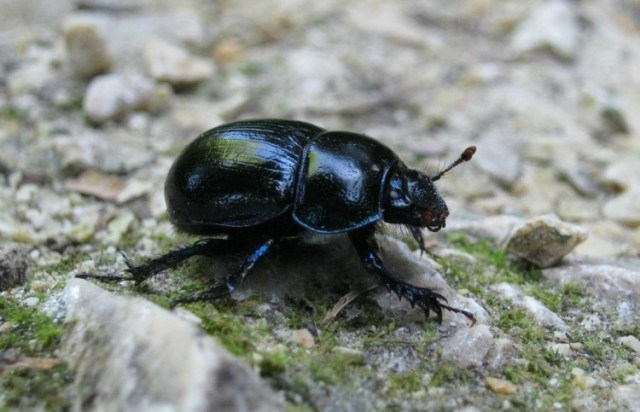 Use baby powder in garden to ward off beetles
