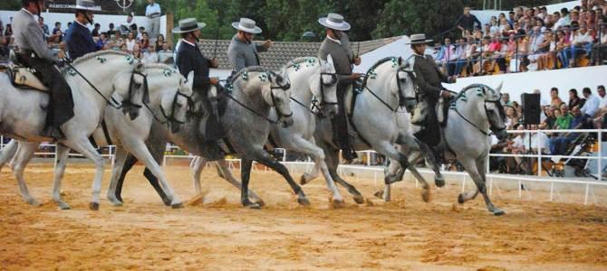 El Caballo Andaluz (o Andalusian Horse)