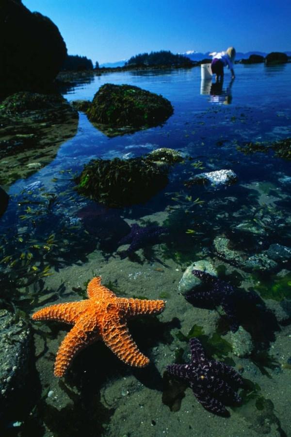 Скачать обои на телефон море – красивые картинки