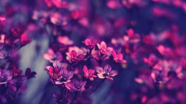 Обои на раб стол цветы - фон
