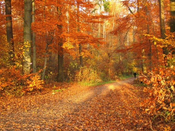 Фото осень в парке природа - красивые картинки