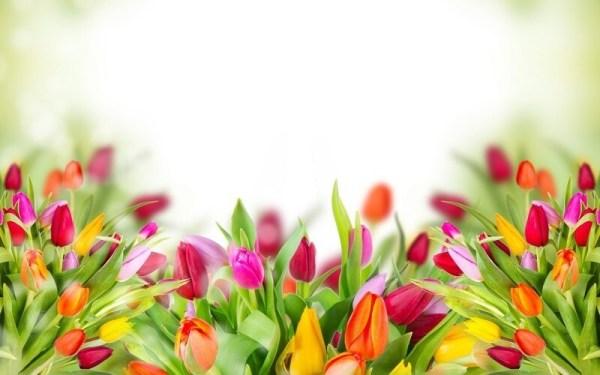Цветы для фона в презентации - подборка