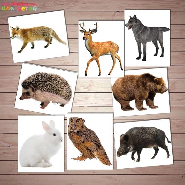 Картинки для детей лес с животными - подборка