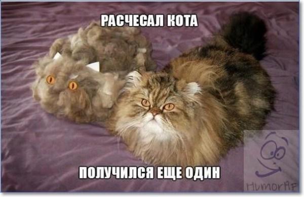 Смешные фото про котов с надписями