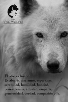 foto lobo blanco
