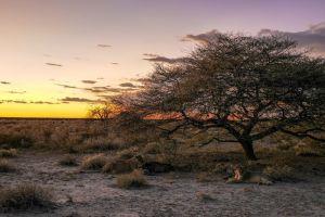 Safari in Nambia Tipps
