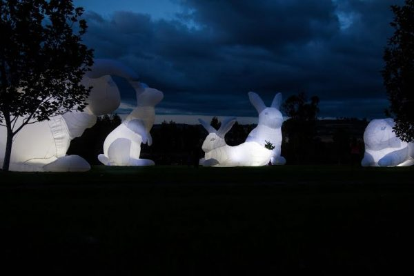 clonmel junction festival rabbits