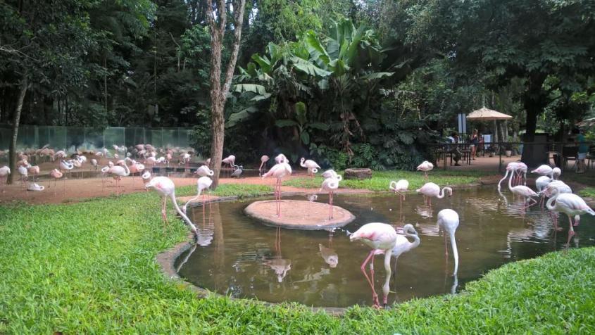 Fenicotteri rosa al Parco degli Uccelli in Brasile