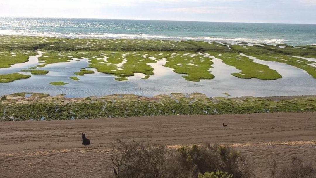 Paesaggio Penisola di Valdés con leoni marini in Argentina