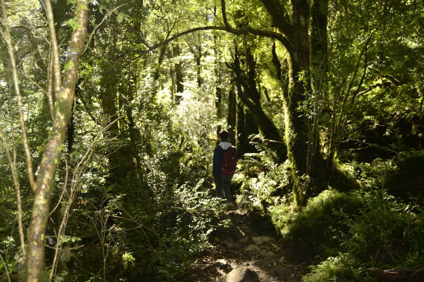 Bosco Incantato nel Parco Nazionale Queulat in Cile