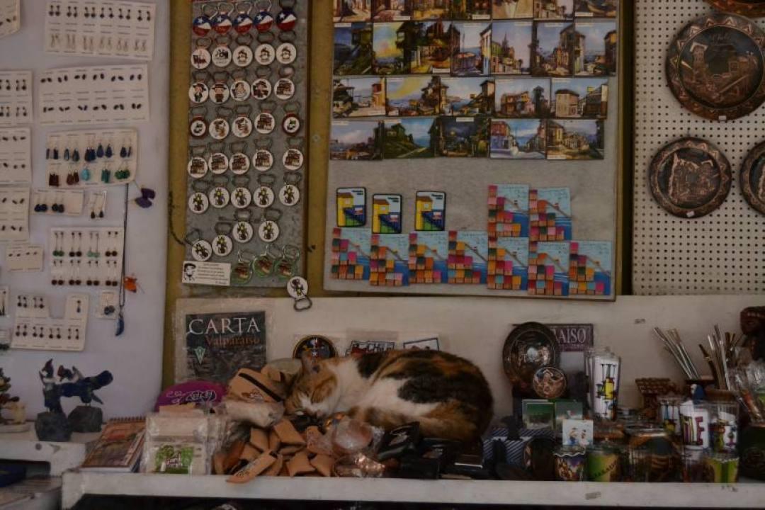 Bancarella di souvenir con gatto a Valparaiso in Cile