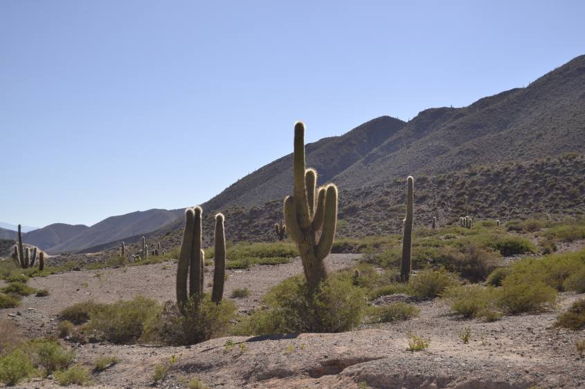 Paesaggi e cactus all'interno del Parco Nazionale los Cardones nel tour a Cachi in Argentina