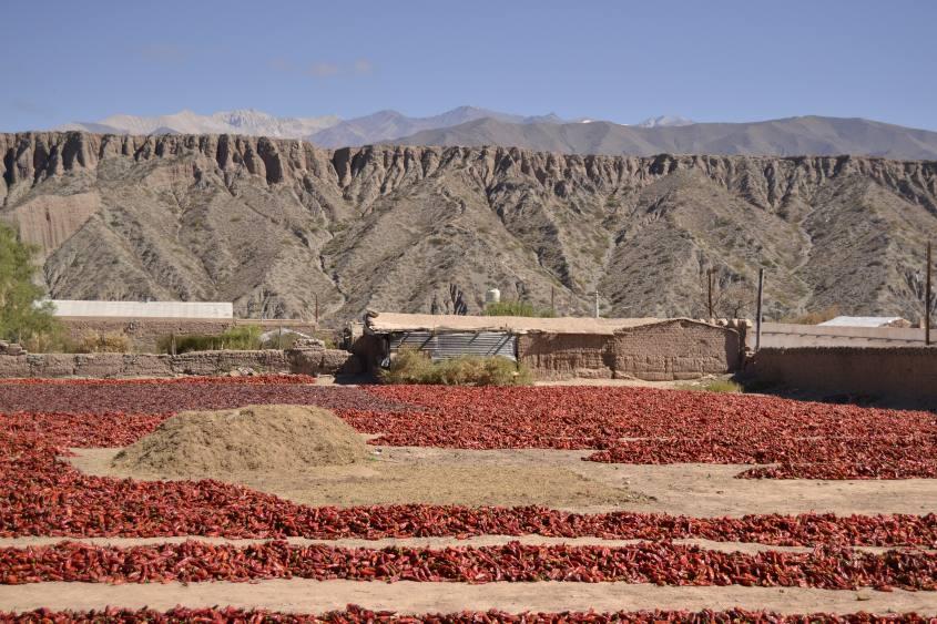 Distesa di un campo di paprika ad essiccare durante il tour da Salta a Cachi in Argentina