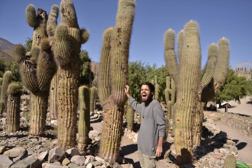 Parco dei cactus all'interno della fortezza Pucará de Tilcara in Argentina