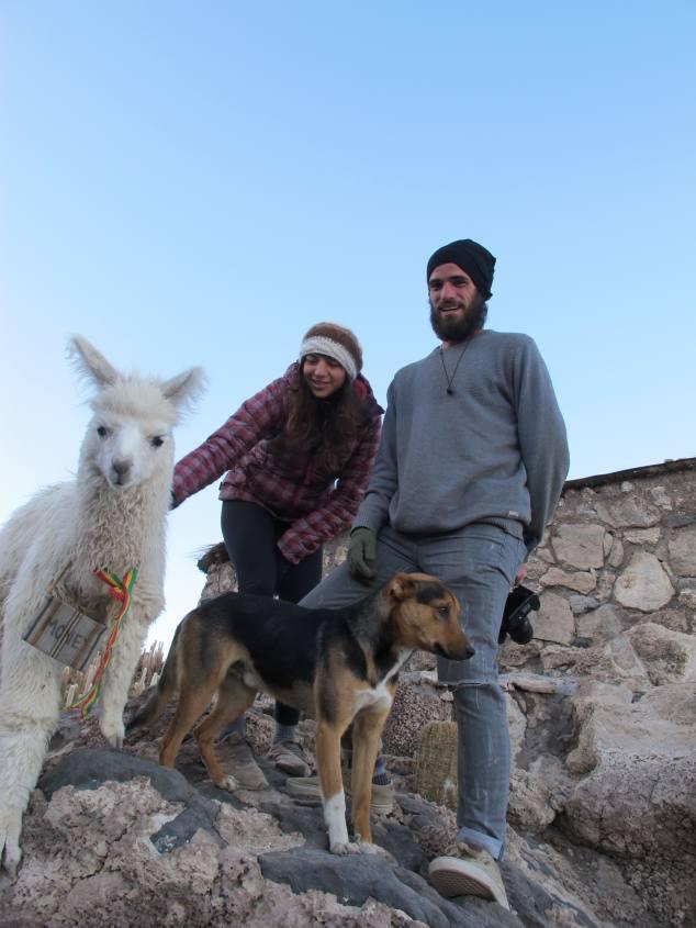 Amici animali all'Isola Incahuasi nel Salar di Uyuni
