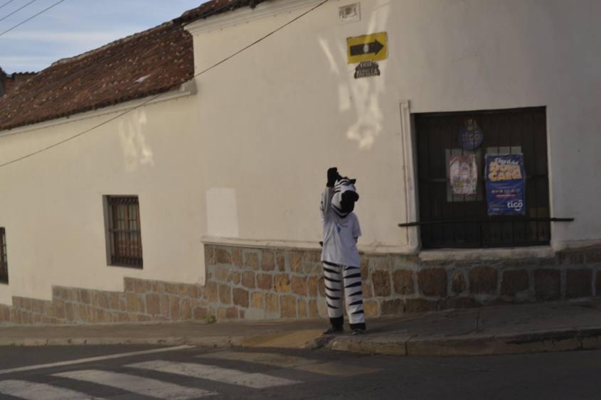 Zebra mascotte per l'attraversamento pedonale a Sucre in Bolivia