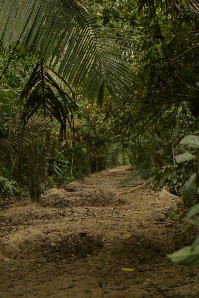 Percorso Riserva Tambopata