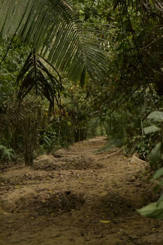 Percorso all'interno della Riserva Naturale Tambopata nella Foresta Amazzonica del Perù