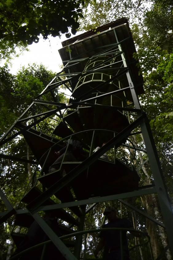 Torre d'osservazione all'interno della Riserva Tambopata nella Foresta Amazzonica del Perù
