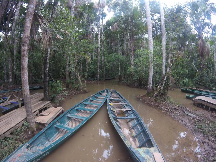 Barche tipiche all'interno della Foresta Amazzonica