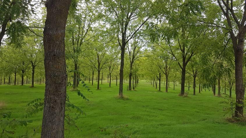 Parco del Veio