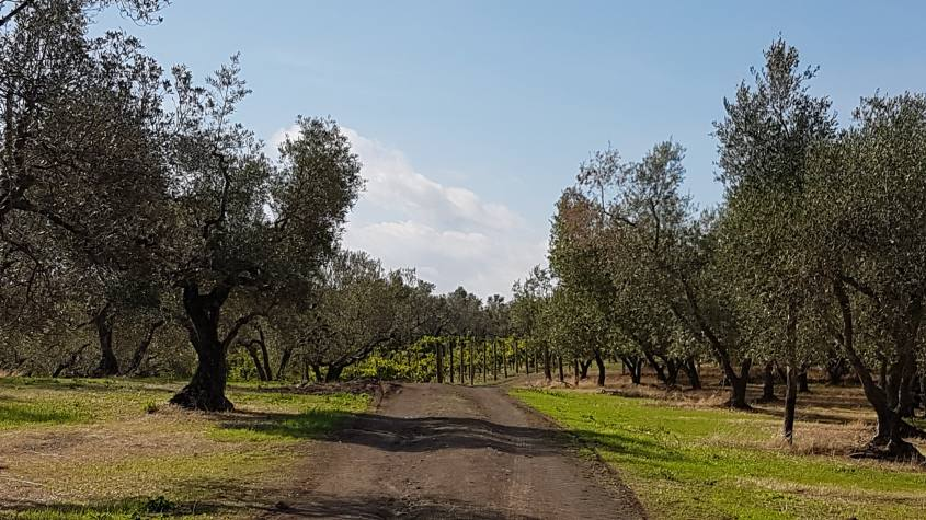 Paesaggi Viterbo - Vetralla