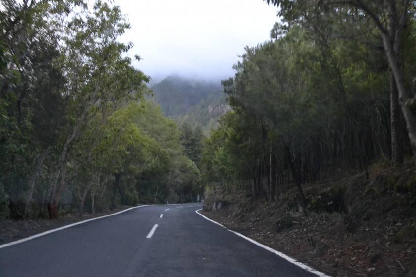 Bosco del parco nazionale del Teide a Tenerife