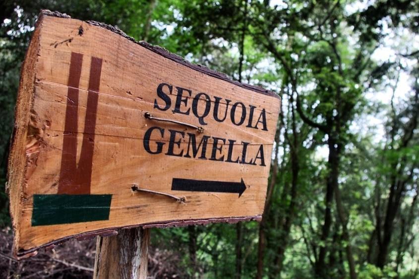 Cartello della Sequoia Gemella all'interno del Parco Storico del Castello di Sammezzano