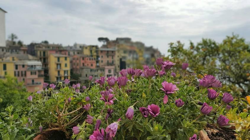 Paesaggio con fiori, mare e case colorate a Corniglia delle Cinque Terre