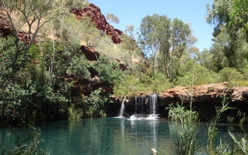 Piscina naturale con cascate Fern Pool dentro il Dales Gorge nel Parco di Karijini