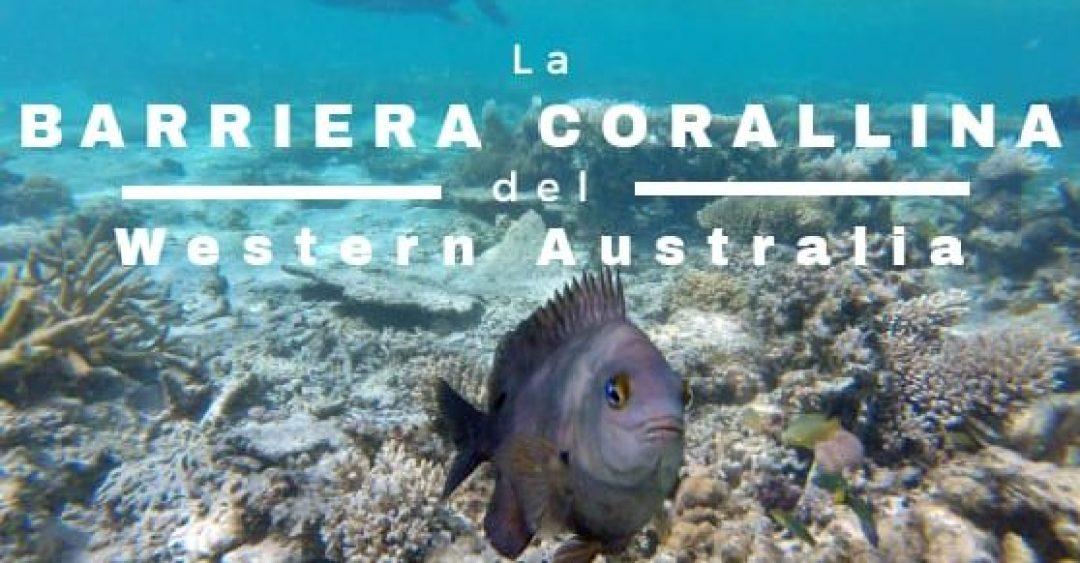 """Copertina articolo """"La barriera corallina del Western Australia: da Exmouth a Coral Bay"""""""