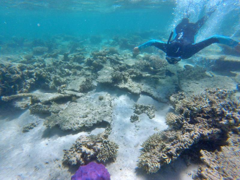 Snorkeling nella barriera corallina del Parco Nazionale Cape Range spiaggia Oyster Stacks in Western Australia