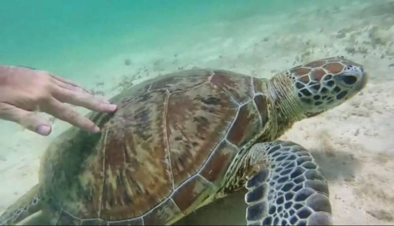 Fare il bagno con le tartarughe marine nella barriera corallina del Parco Nazionale Cape Range in Western Australia