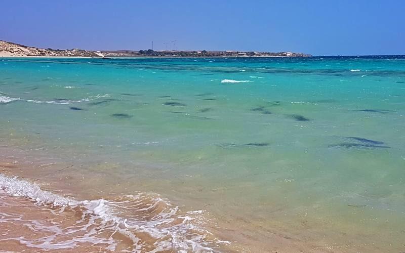Squali del reef vicino la costa alla spiaggia Skeleton Bay a Coral Bay in Western Australia