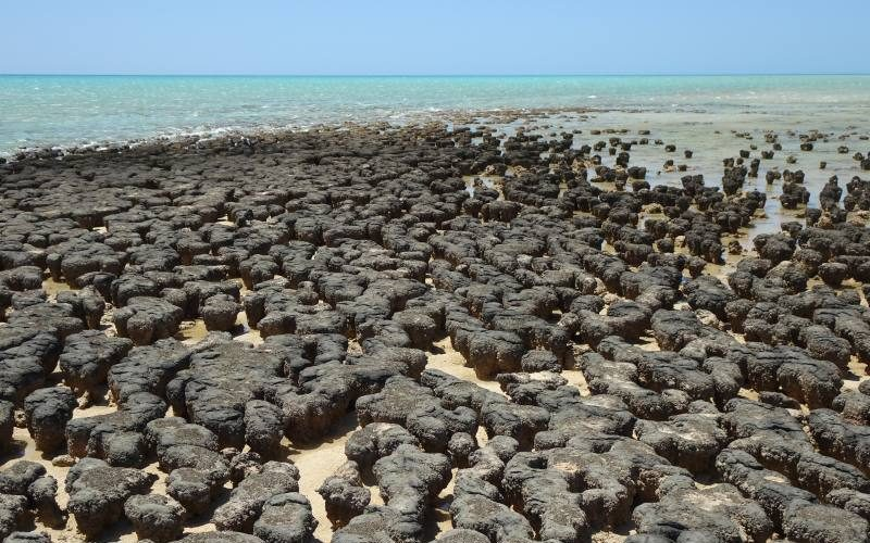 Stromatoliti e oceano ad Hamelin Pool a Shark Bay in Western Australia