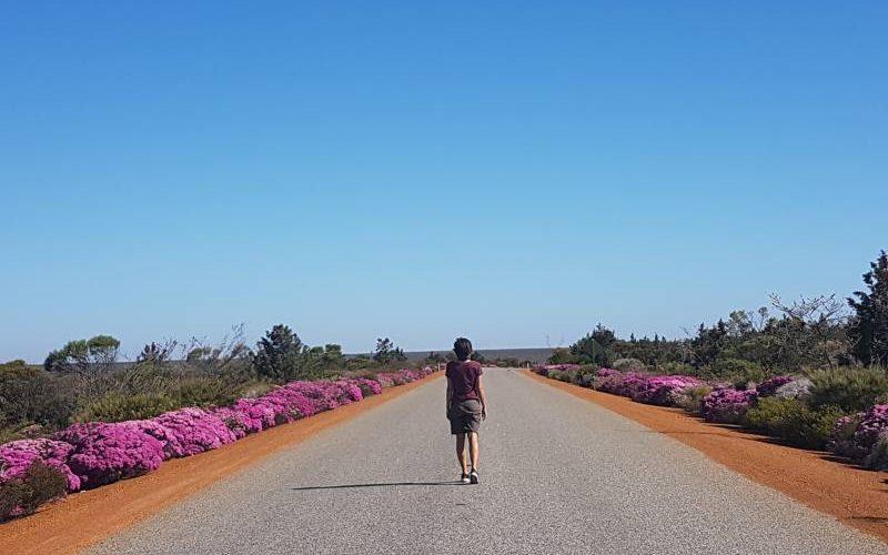 Strada del Parco Nazionale Kalbarri piena di fiori selvatici rosa