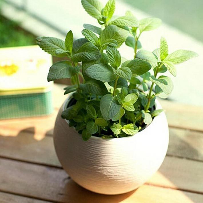 10 Herbs That Grow Indoors All Year Long