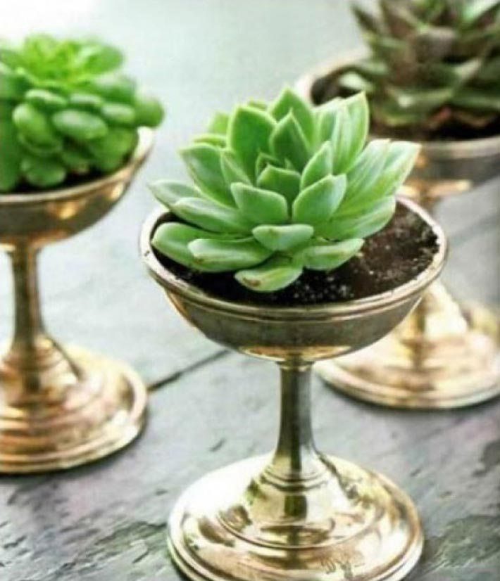 Succulent Gardens for Small Spaces