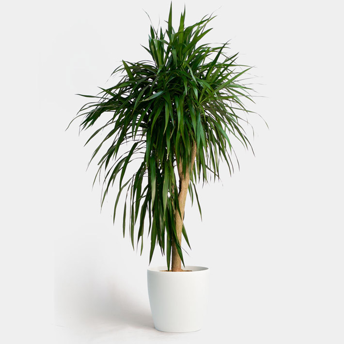Air-Cleaning Houseplants That Are Almost Impossible to Kill