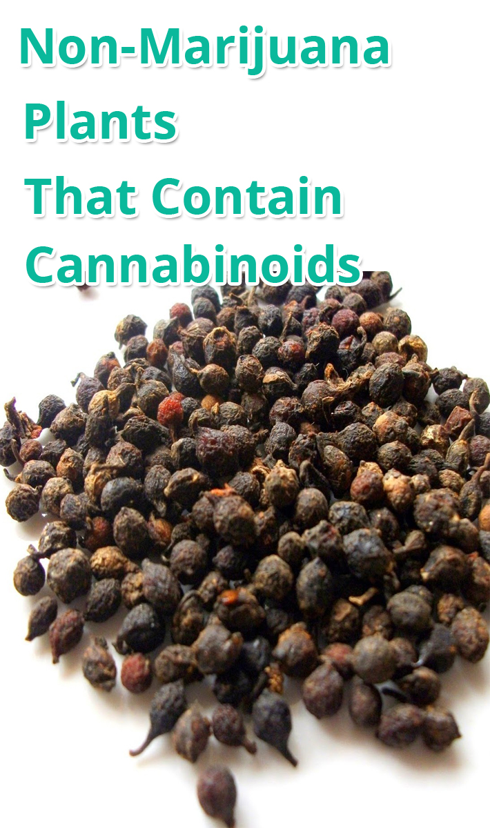 Non-Marijuana Plants That Contain Cannabinoids