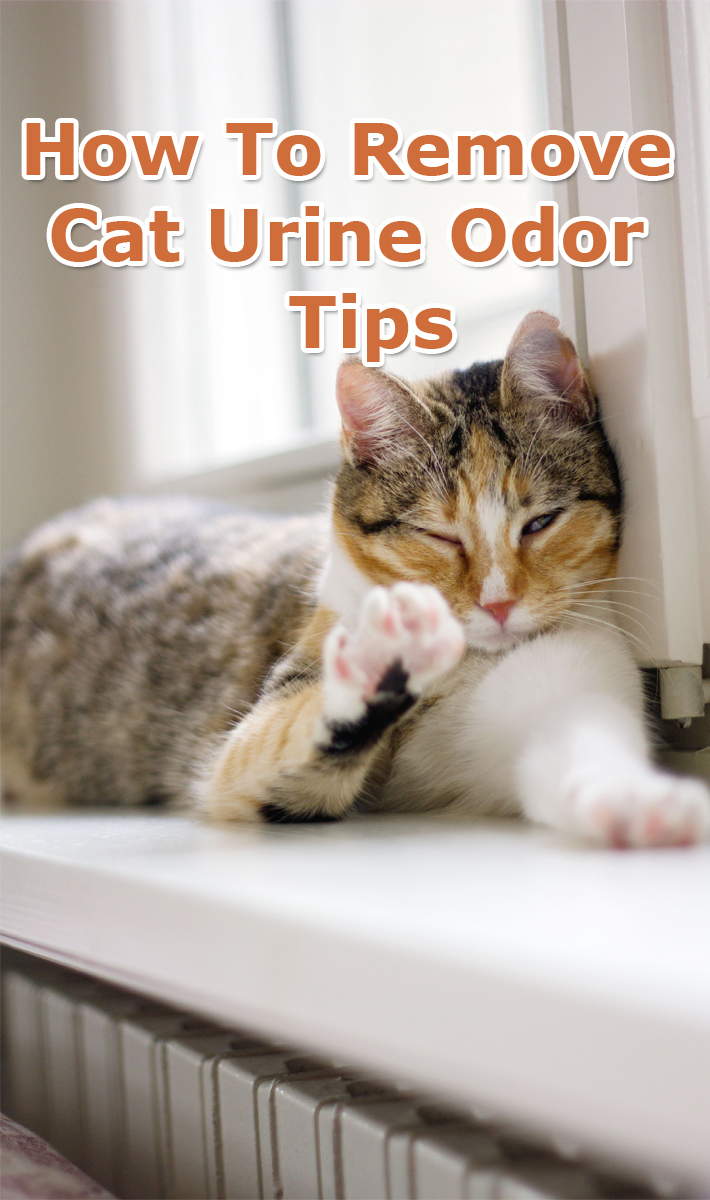 How To Remove Cat Urine Odor - Tips